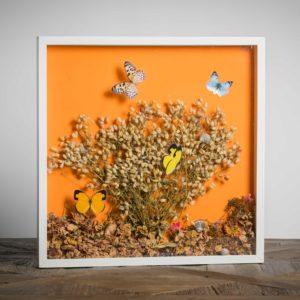 Estate - materiali: flora spontanea, gusci di lumaca, farfalle plastificate, cartoncino colorato, fiori misti - 50x50 cm
