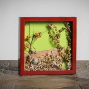 venduto Senza Titolo - materiali: flora spontanea mista, guscio di lumaca, listello di legno di riciclo - 25x25 cm