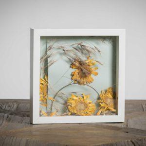 Il vento - materiali: gerbere, stecca metallica di reggiseno, flora spontanea - 25x25 cm
